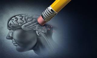 Guía: Consejos y Alimentos Para Evitar El Alzheimer