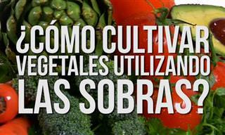 Cultiva Tus Propios Vegetales a Partir De Sobrantes