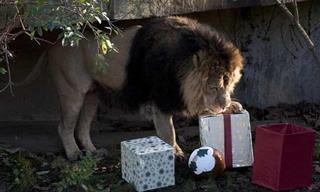 La Navidad Ha Llegado Para Los Animales Del Zoológico De Londres