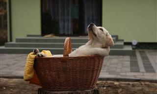 ¿Sabías Que un Perro Puede Tener Beneficios Terapéuticos?