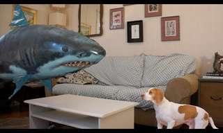 Adorable Perro Vs Tiburón Volador