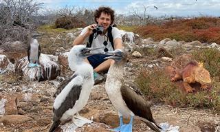 Impresionantes Especies Animales En Las Islas Galápagos