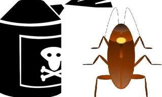 Repelentes De Cucarachas Caseros y Naturales