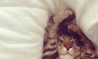 ¡Un Fantástico Día De Gatos!