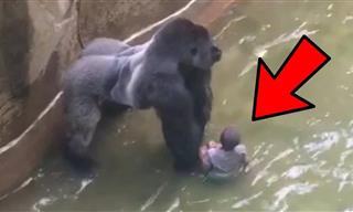 10 Animales Salvajes Rescatando Humanos