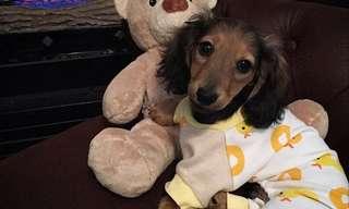 Fiesta De Cachorros En Pijamas