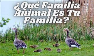 Test: ¿Qué Familia Animal Es TU Familia?