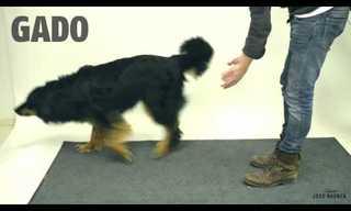 ¡Mira La Reacción De Los Perros a Estos Trucos De Magia!