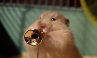 Hámsters Navideños Al Ritmo Del Jazz