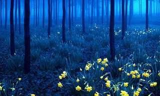 Un Paseo Por 13 Mágicos y Misteriosos Bosques