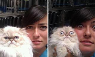 ¡Estos Gatos No Saben Dónde Esconderse Del Veterinario!