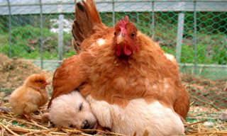 Insólitas Parejas De Animales Durmiendo La Siesta