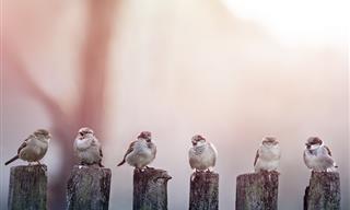 Cuento Espiritual: El Canto De Ese Pájaro