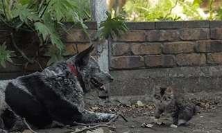 Los Animales Más Divertidos y Ocurrentes
