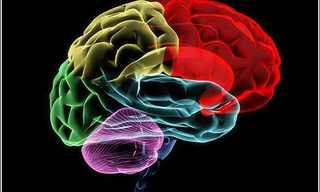 El Sorprendente Funcionamiento Del Cerebro