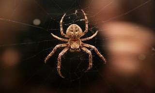 10 Consejos Naturales Para Deshacerte De Las Arañas
