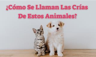 Test: ¿Conoces Las Crías De Estos Animales?