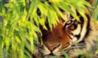 ¿Encontrarás Al Animal Oculto En La Imagen?