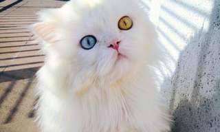 ¡Si! ¡Hoy Es Día De Gatos, Nuevamente!