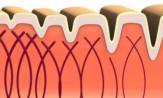 Colágeno: Conoce Más Sobre Esta Importante Proteína