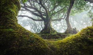 Asómbrate Con El Antiguo Bosque De Laurisilva De Madeira