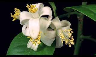 El Bellísimo Ciclo De Vida De Las Flores En Primer Plano