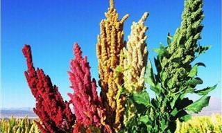 18 Plantas Comestibles Curiosas