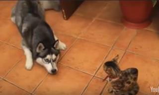 Lo Que Sucede Cuando Los Perros Se Ponen Pesados…