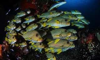 Las Misteriosas Profundidades Del Océano