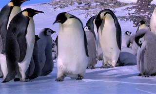 Divertida Compilación De Pingüinos Divertidos y Torpes