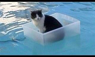 ¡No Te Puedes Perder Esta Recopilación De Gatos y Sus Locuras!