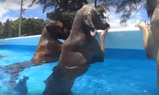 Compilado de Videos De Perros Que Aman El Verano