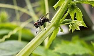 Métodos Caseros y Naturales Para Controlar Plagas