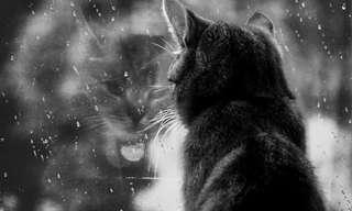 Los Días Nublados Traen Melancolia...