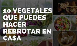10 Vegetales y Hierbas Que Puedes Hacer Rebrotar En Casa