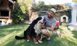 Guía Completa Para El Cuidado Óptimo De Tu Mascota