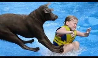 La Vida Es Más Divertida Si La Compartes Con Un Labrador