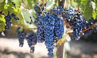 Un Fruto Saludable Con Muchos Beneficios