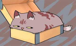 Guía Para Interpretar El Lenguaje De Los Gatos