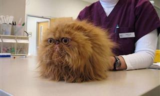 14 Gatos Asutados Visitan a Su Veterinario