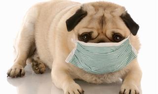 Cómo Proteger a Tus Animales Del Coronavirus