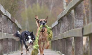 12 Señales De Que Tus Perro Es Muy Inteligente