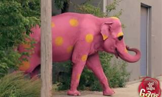 Diversión: Todo Comienza Con Un Elefante Rosado...