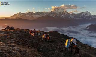 Increíbles Fotografías Del Concurso 2015 De National Geographic