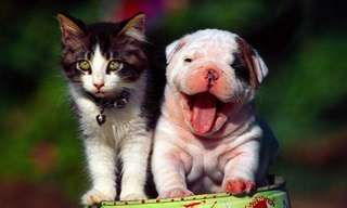 Verdadero o Falso, Mitos Sobre Perros y Gatos