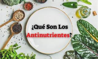 ¿Son Dañinos Los Antinutrientes? Aquí Está Todo Lo Que Necesitas Saber