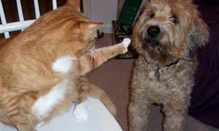 Los Gatos Siempren Logran Dominar a Los Perros