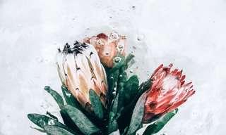 Hermosos Retratos De Flores Sumergidas