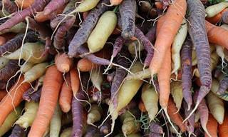 Comparación De 8 Verduras Que Vienen En Diferentes Colores