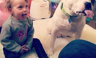 Te Mostramos Por Qué Todo Niño Necesita Un Perro En Su Vida
